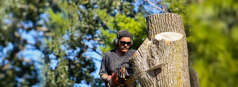 Make it easy, call treesy