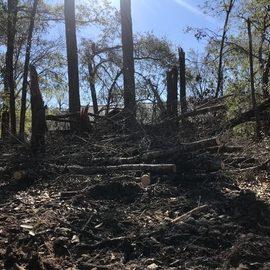 Before - Tree & Debris Removal & Yard Clean